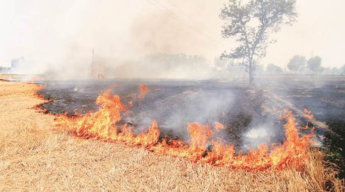 FIR Registered Against Farmer For Burning Wheat Stubble