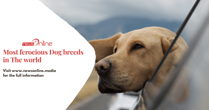 Most ferocious Dog breeds in the world