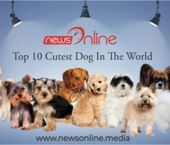 Top 10 cutest dog in the world