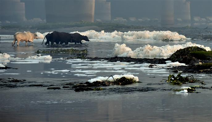 CPCB raises concern on Pollution and Frothing in River Yamuna