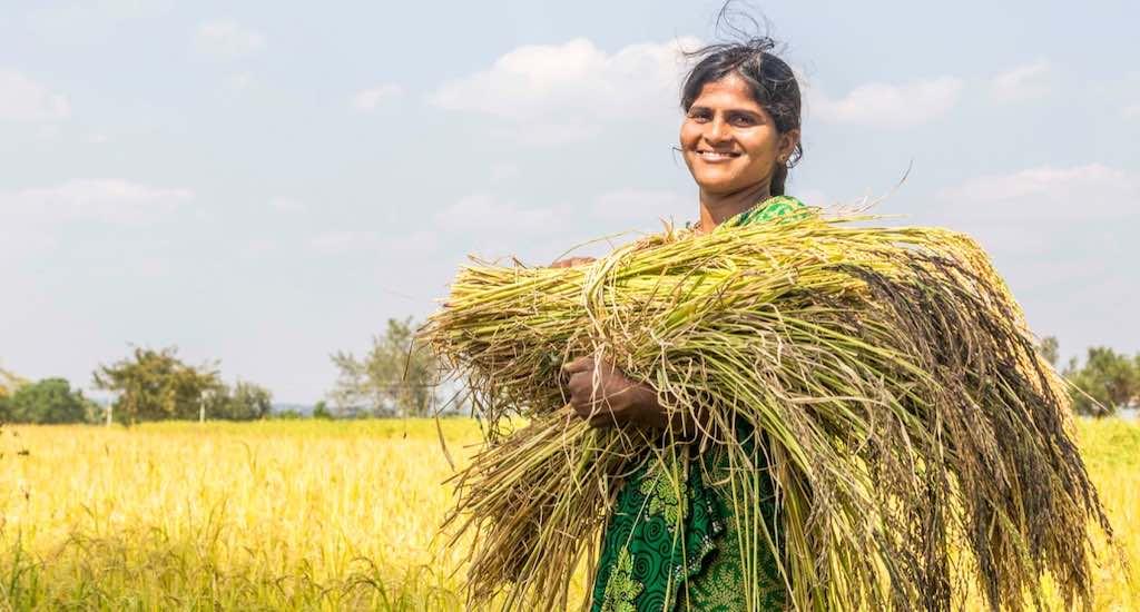 Promote Indigenous Varieties of Rice