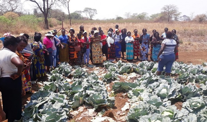 Training to Women in Agriculture