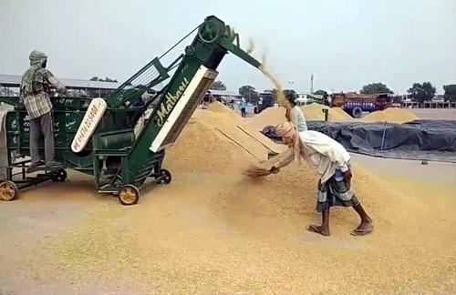 178542 MT Wheat Procured on third day