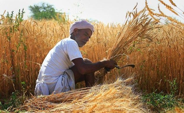 Haryana Government today has procured a total of 1.20 lakh tonnes of wheat through various procurement