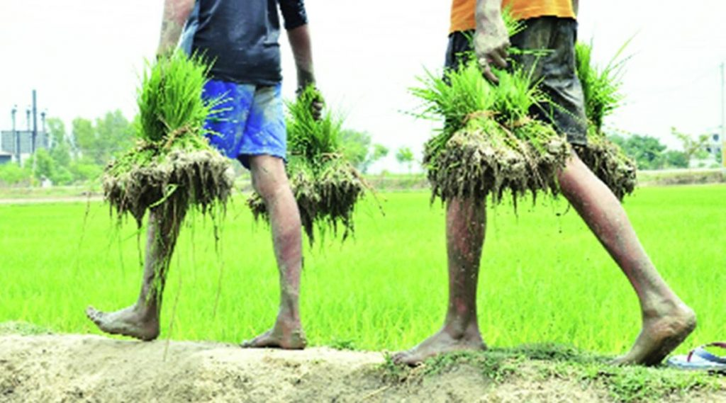 AGRI EXPERTS MOTIVATE FARMERS TO ADOPT 'DSR' FOR SAVING WATER ·