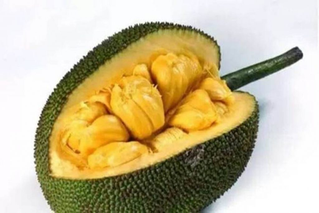 Jackfruits from Tripura exported to London