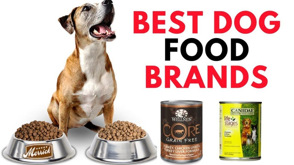 Best Dog Food Brands for a Healthy Life