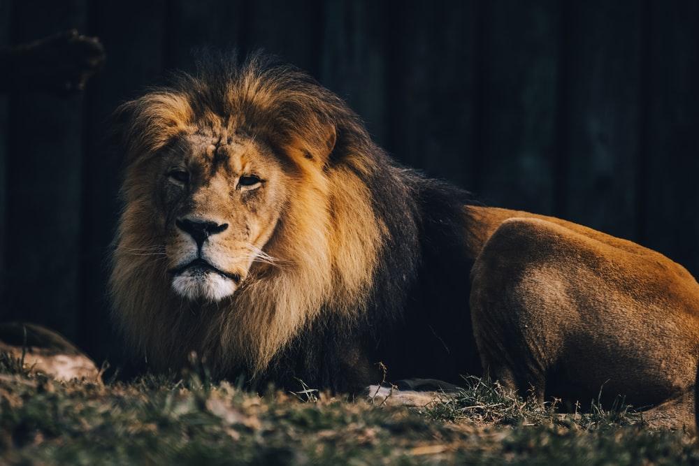 Ferocious animals of the world