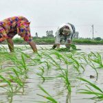 SC Commission seeks report on Panchayats resolutions for paddy plantation rates fixation