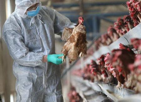 IDSP State Surveillance Unit (SSU), Haryana to initiate an epidemiological investigation into the first documented human case of Bird Flu