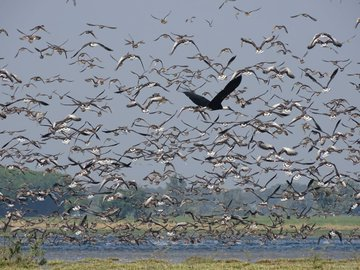 Four more sites of India added to Ramsar list as wetlands of International importance.