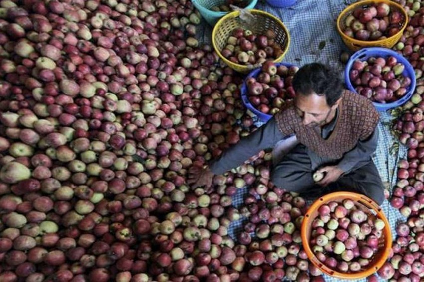 State Government to ensure better marketing of apple produce