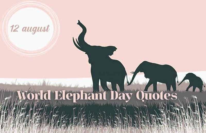 World Elephant Day Wishes